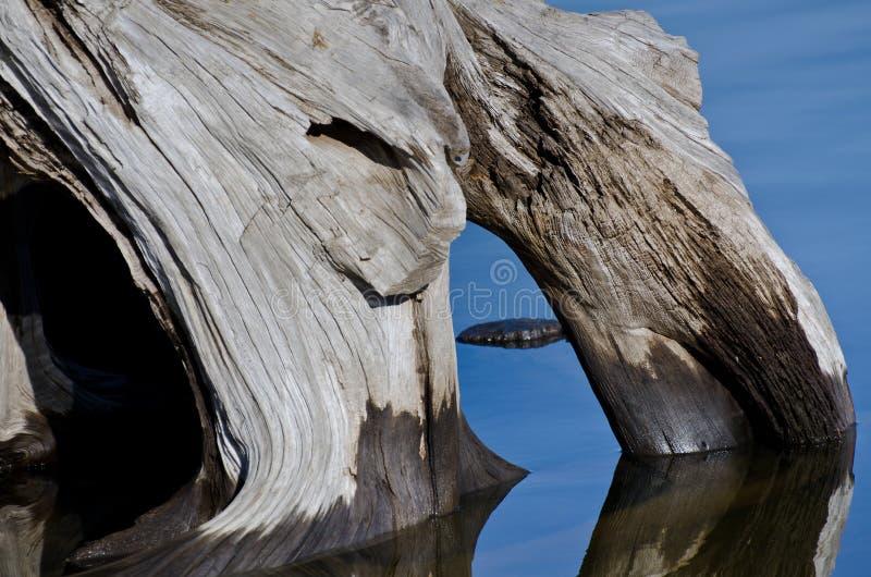 Sumário da natureza - madeira lançada à costa que reflete na água fotos de stock royalty free
