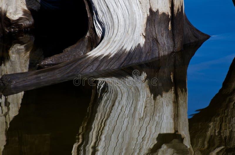 Sumário da natureza - madeira lançada à costa que reflete na água imagens de stock