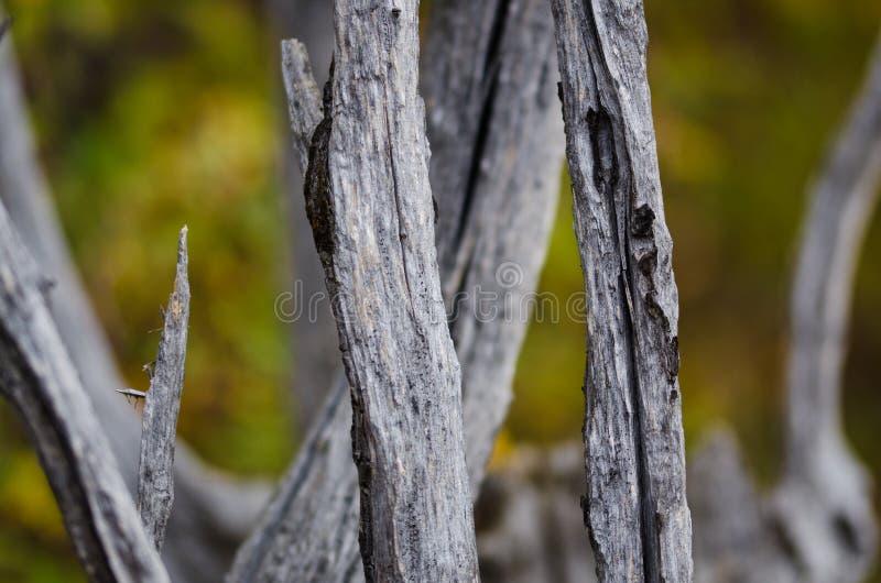 Sumário da natureza – madeira naturalmente resistida foto de stock