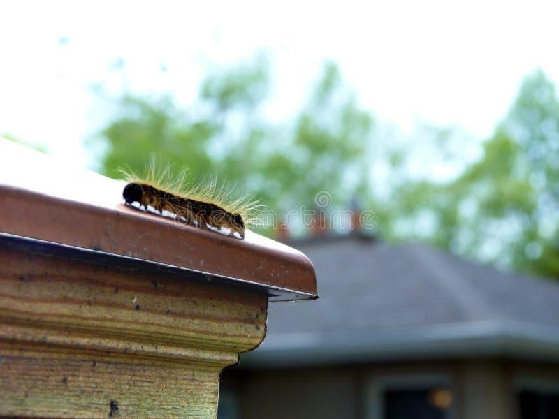 Sumário de Caterpillar em uma cerca de cobre Cap fotografia de stock royalty free
