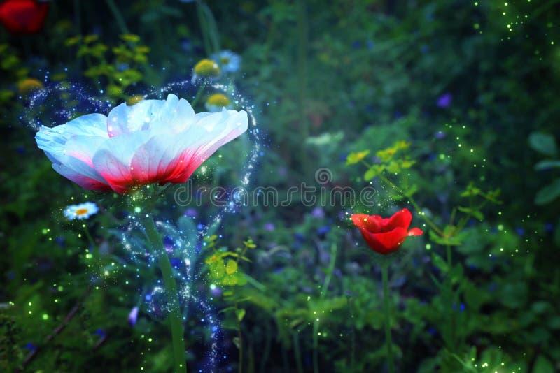 Sumário e foto mágica da flor com voo do vaga-lume no conceito do conto de fadas da floresta da noite ilustração stock