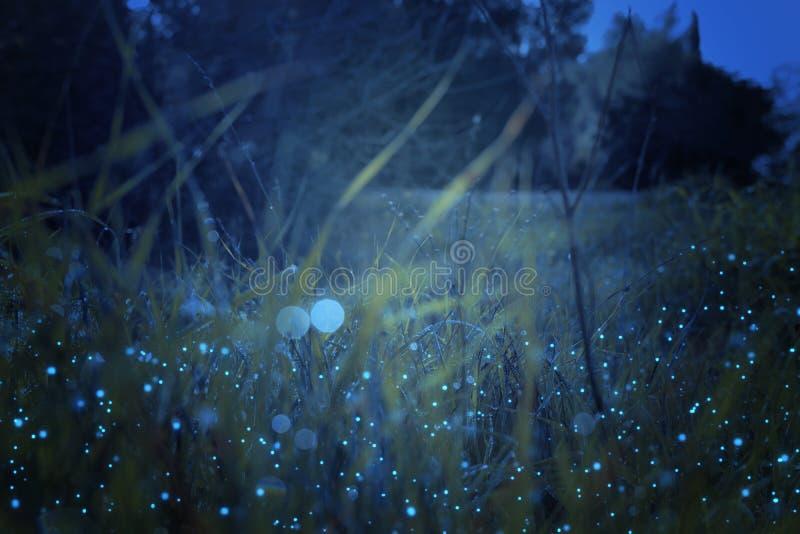 Sum?rio e foto m?gica da grama alta com voo do vaga-lume no conceito do conto de fadas da floresta da noite ilustração royalty free