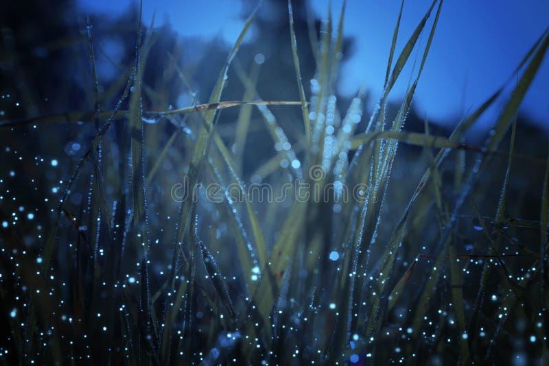 Sum?rio e foto m?gica da grama alta com voo do vaga-lume no conceito do conto de fadas da floresta da noite ilustração stock