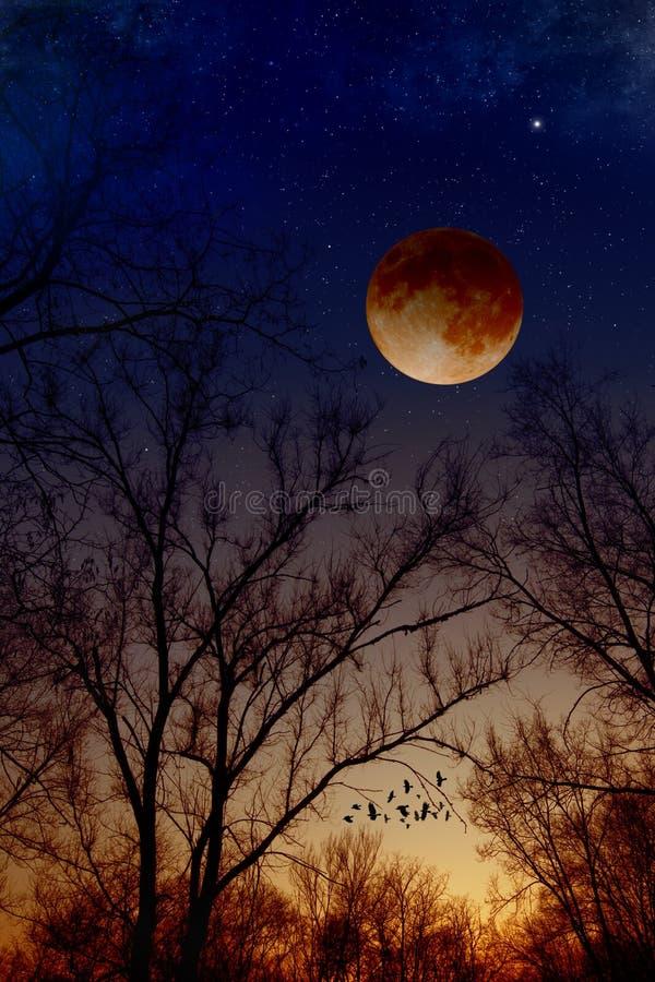 Sumaryczny księżyc zaćmienie zdjęcie royalty free