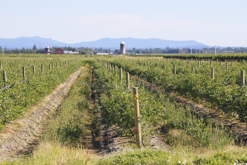 Sumas,华盛顿莓果农场 免版税库存照片