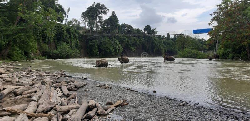 Sumatra Dschungeltour lizenzfreie stockbilder