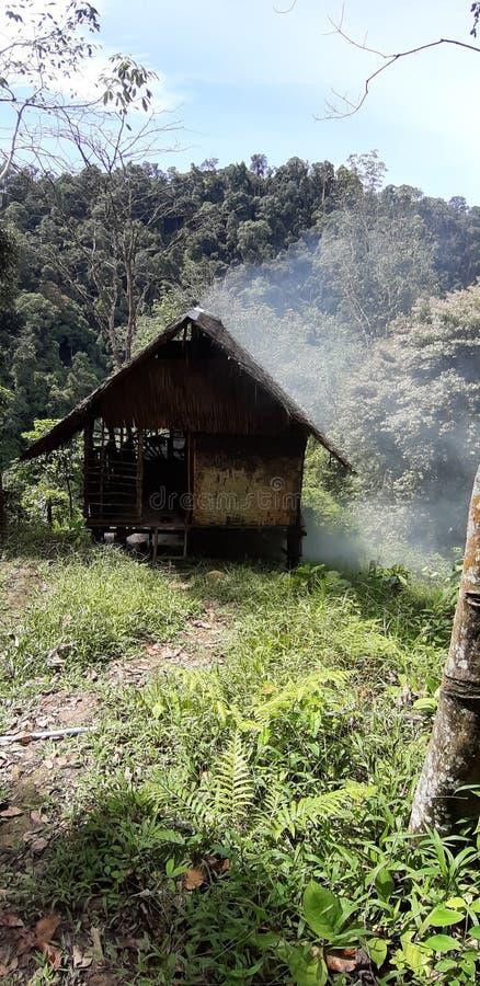 Sumatra Dschungeltour stockbilder