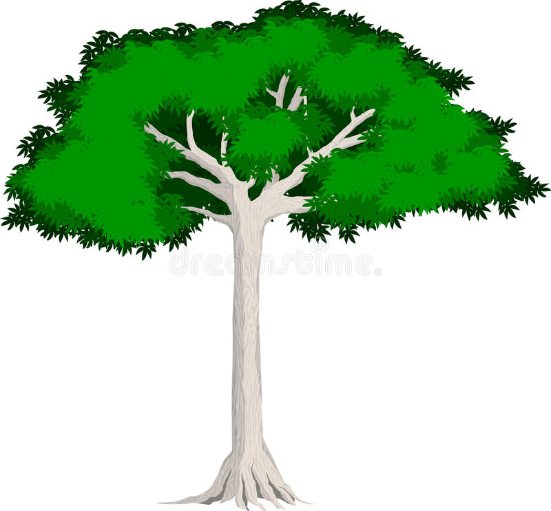 Sumaumeira tropical da floresta úmida do vetor ilustração royalty free