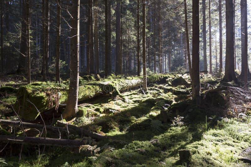 Sumava山的秋天森林 免版税库存图片