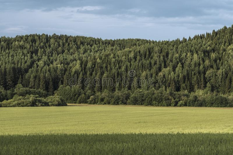 Sumer landscape of Eurasia. Landscape depicting forest and meadows of Eurasia royalty free stock photo