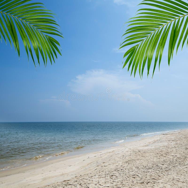Sumer tropische strandpalmachtergrond stock foto's
