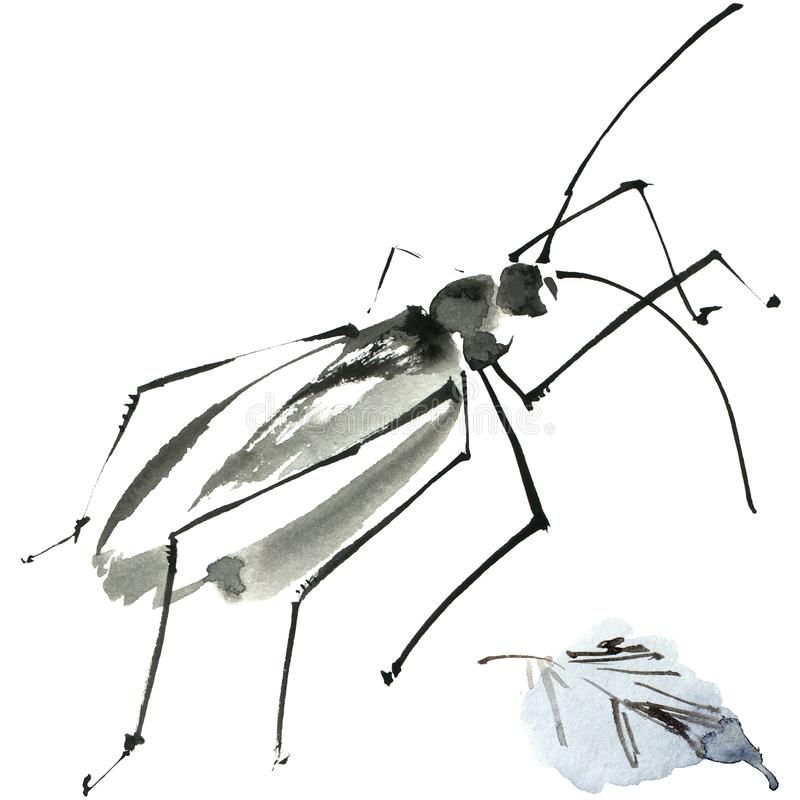 Sumi-e ink insect. Watercolor and ink illustration of insect, sumi-e and u-sin painting royalty free illustration