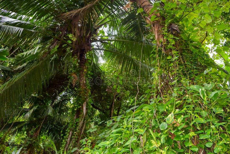 Sumiaste dżungle w Seychelles fotografia stock