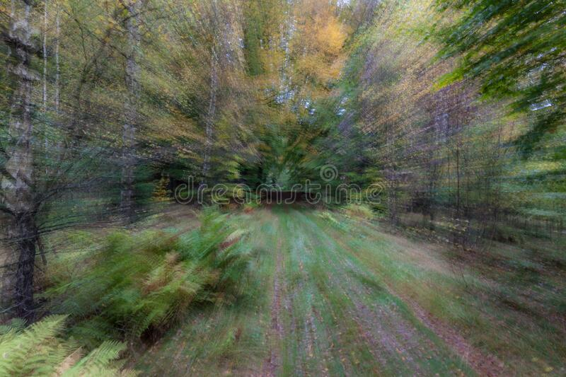 Summar forest road on a bright sunny day. Abstract photo. Colorful textured background. long shutter speed. Abstract photo, forest road in summar photographed stock image