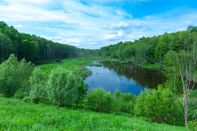 Summer湖和干燥结构树临近切尔诺贝利 库存照片
