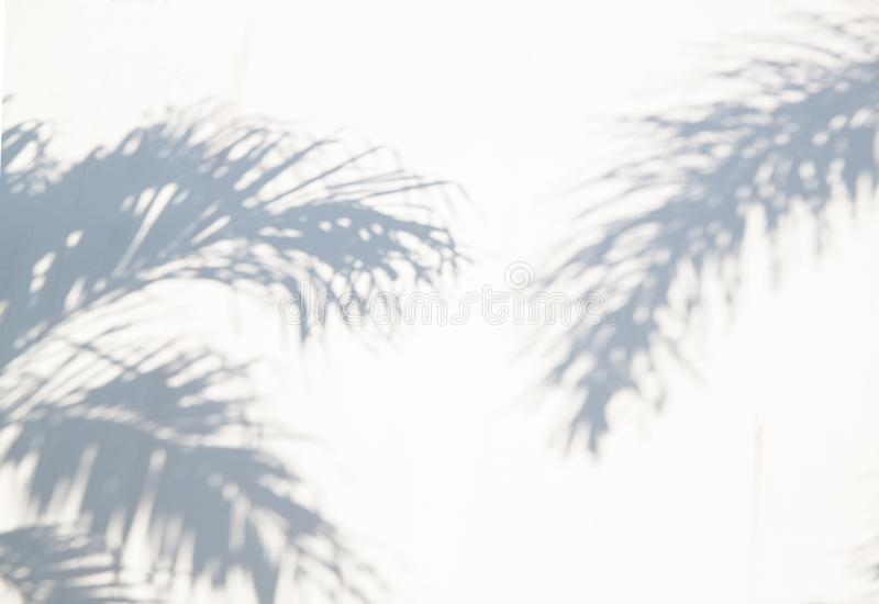 Summer abstract background of shadow exotic palm leaves on a white wall. stock photo