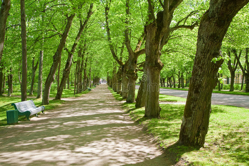 Summer alley. With old trees royalty free stock photos