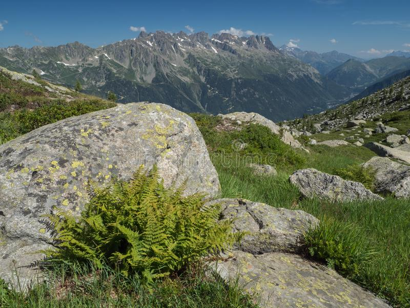 Summer Alpine landscape with boulder and fern royalty free stock photo