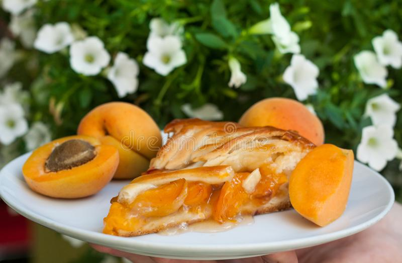 Summer apricot pie on plate, close up stock images