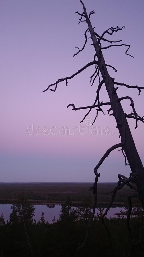 Lonely tree above the marshy lands. Night royalty free stock photography