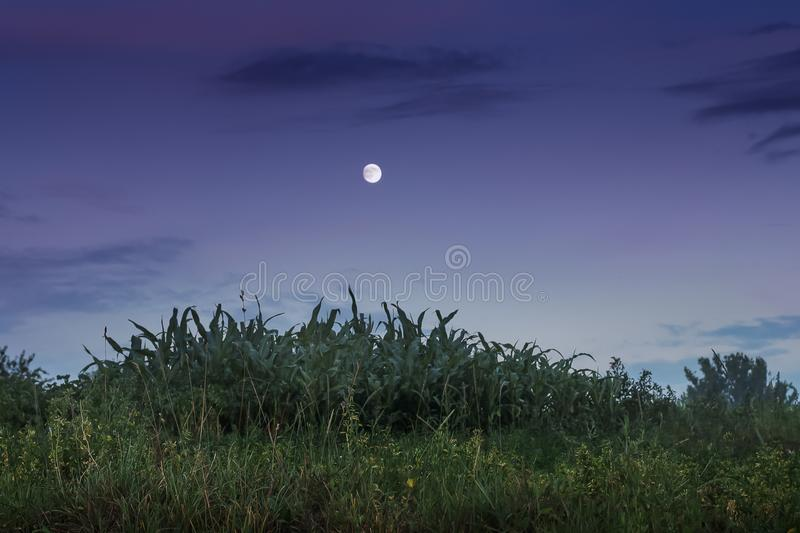 Summer or autumn evening, the moon against the background of a d. Ark blue sky royalty free stock image