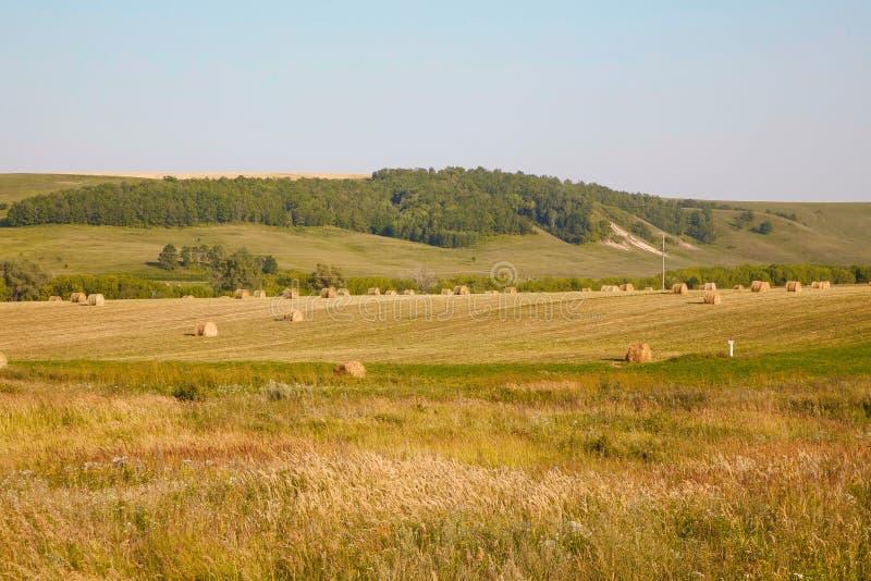 Summer or autumn haystacks on the field. Summer or autumn/ fall haystacks on the field stock photos