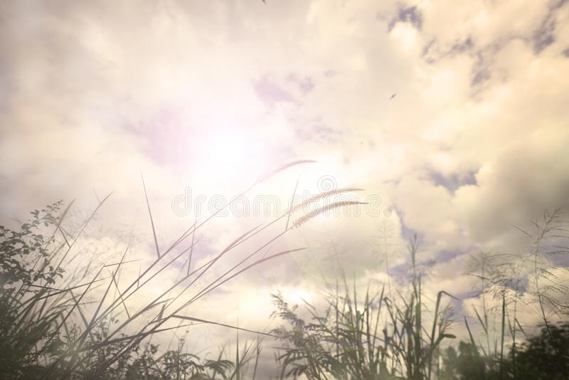 Summer or autumn field grass on beautiful sky background. On light sunny effect stock images