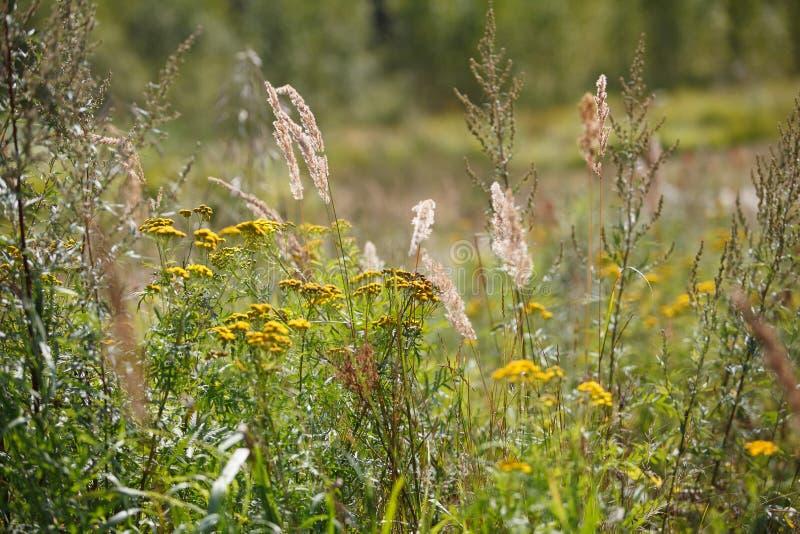 Summer or autumn field grass. Summer or autumn green field grass stock image