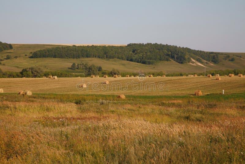 Summer or autumn haystacks on the field. Summer or autumn/ fall haystacks on the field stock photography