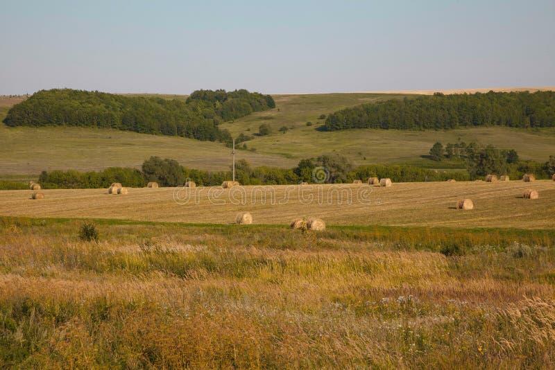 Summer or autumn haystacks on the field. Summer or autumn/ fall haystacks on the field stock photo