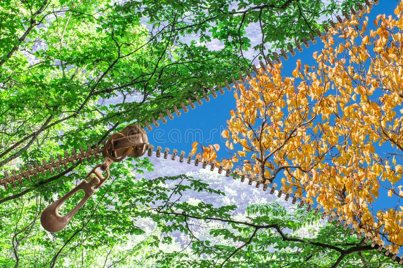 Summer and autumn. Open zipper showing summer tree changing to autumn tree royalty free stock image