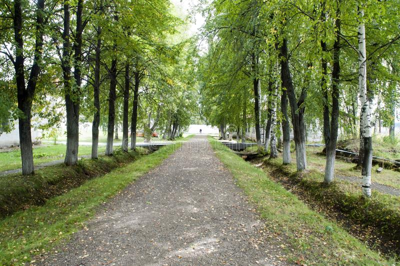Country road lined with birch trees in  early autumn royalty free stock image