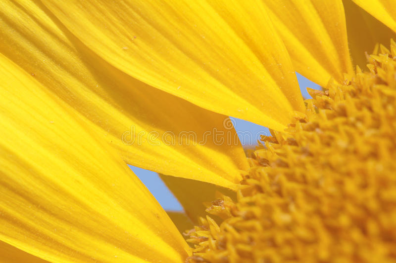 Download Summer Background stock photo. Image of yellow, background - 15203350