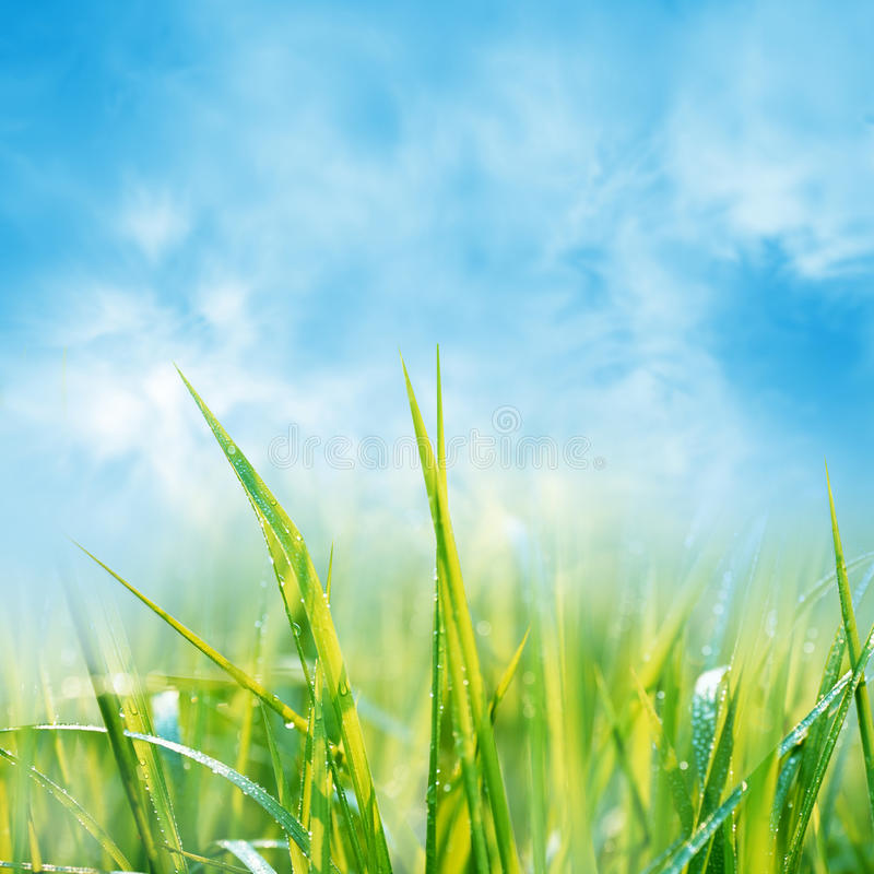 Download Summer Background Stock Images - Image: 19560074