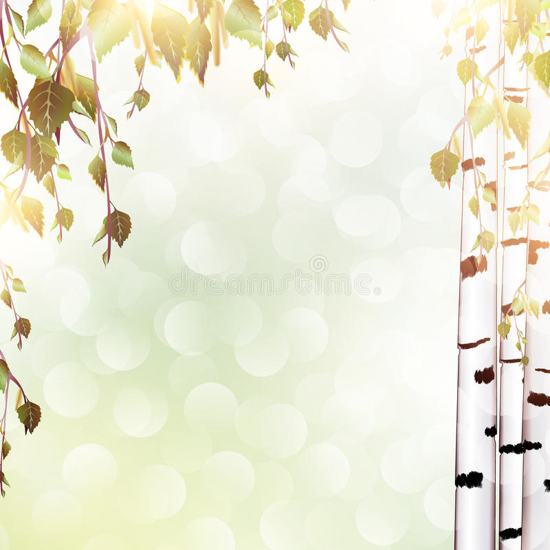 Summer Background With Birch Stock Images