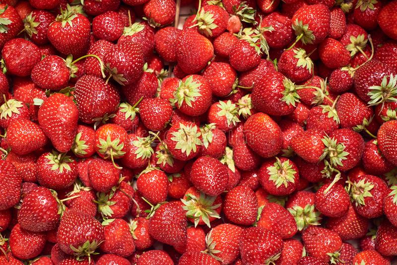 Summer background.Background from fresh and tasty sweet strawbrries. Top view . Organic concept stock photos