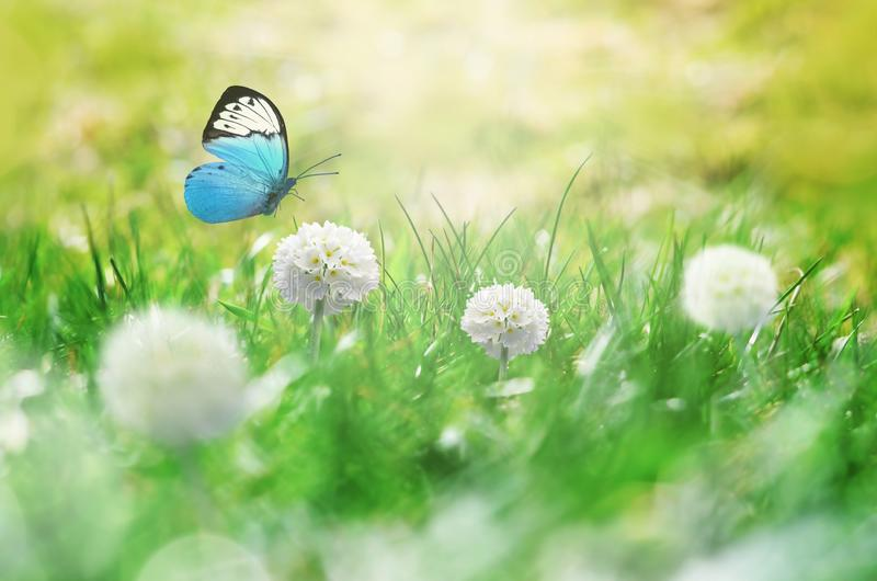 Summer background. Green grass, white flower and butterfly on the meadow.  royalty free stock images