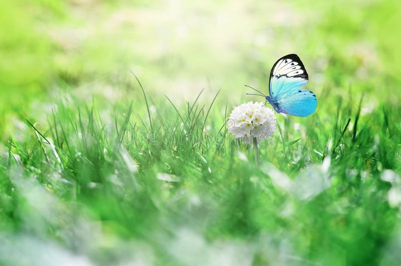 Summer background. Green grass, white flower and butterfly on the meadow.  stock photos