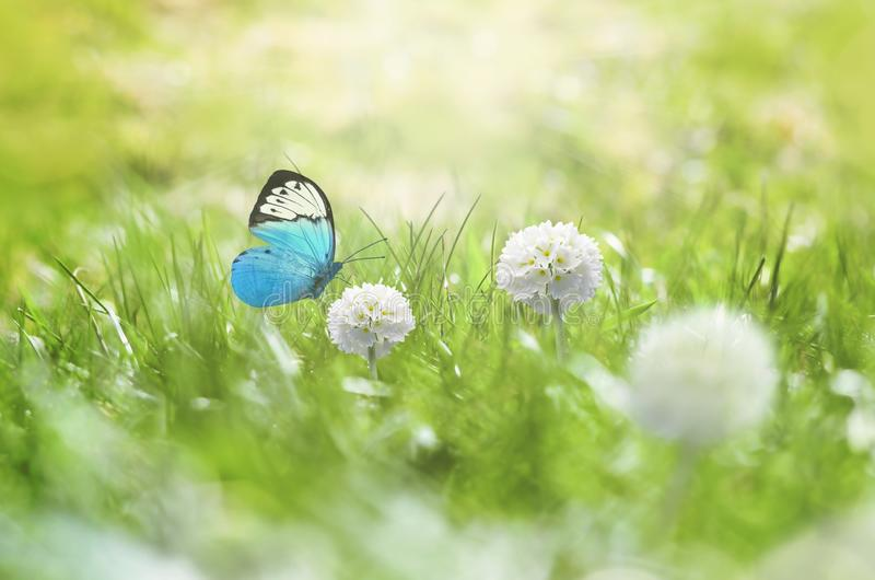 Summer background. Green grass, white flower and butterfly on the meadow.  stock photography