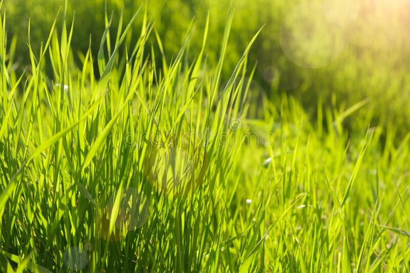 Summer background. rural summer backgrounds. Abstract natural backgrounds with green grass and beauty bokeh royalty free stock photography