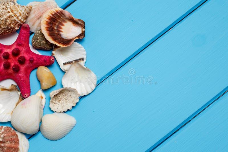 Summer background , Seashells on blue wooden background stock image