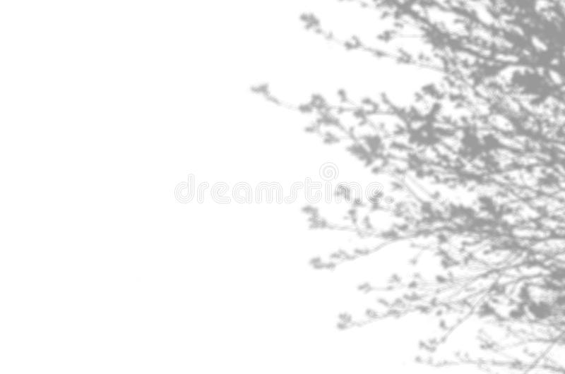 Summer background of shadows branch leaves on a white wall. White and Black for overlaying a photo or mockup royalty free stock images