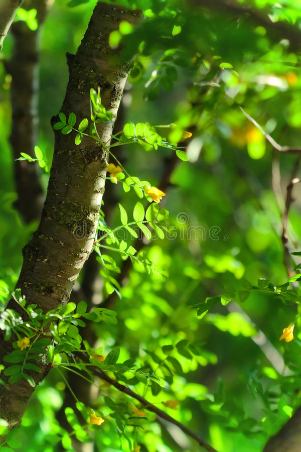 Free Summer Background With Green Leaves Stock Images - 18339294