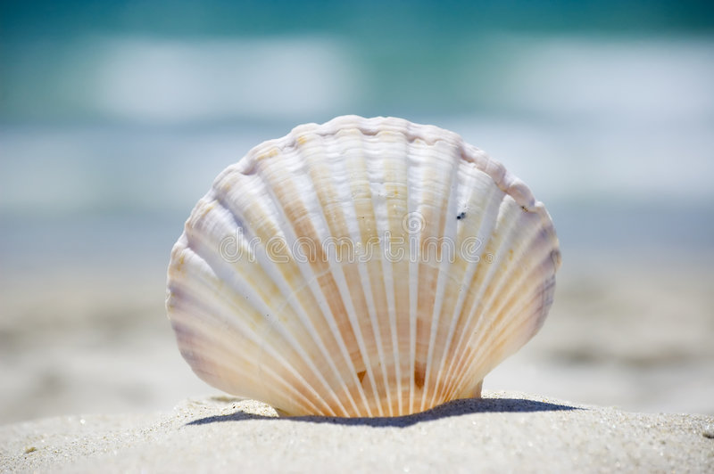 Download Summer at the beach stock image. Image of ocean, colorful - 4127999