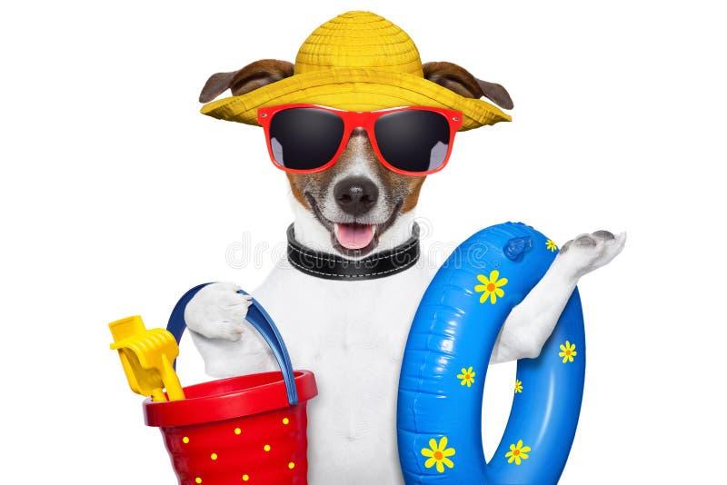 Summer beach dog stock photography