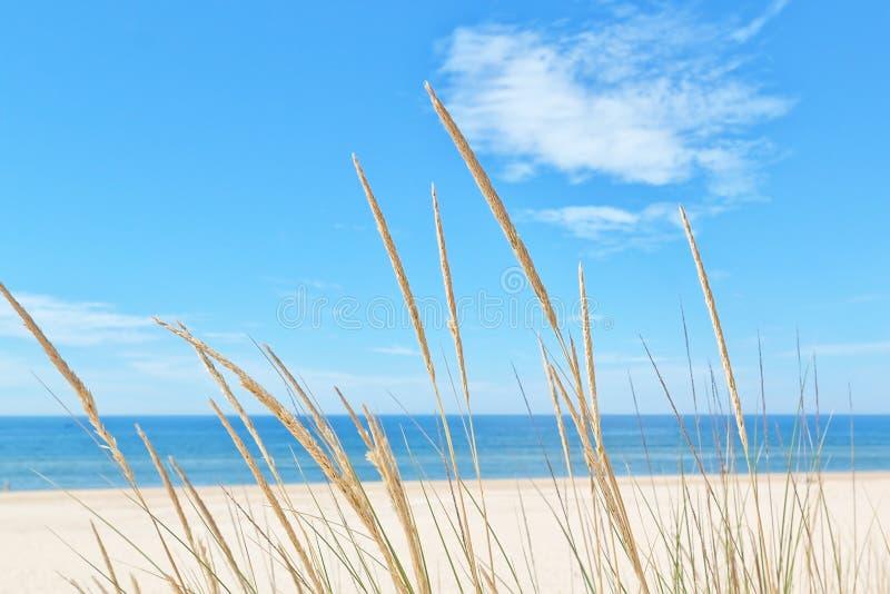 On the summer beach kind of grass . On the summer beach kind of grass on a background of sky and sea stock photos