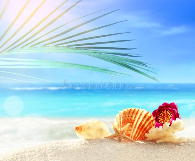 Summer beach with seashell in white sand and tropical palm leaf.  royalty free stock photos