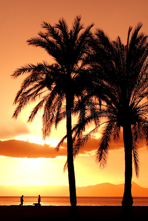 Download Summer Beach Vacation Palm Tree Stock Image - Image of dusk, glowing: 4020377