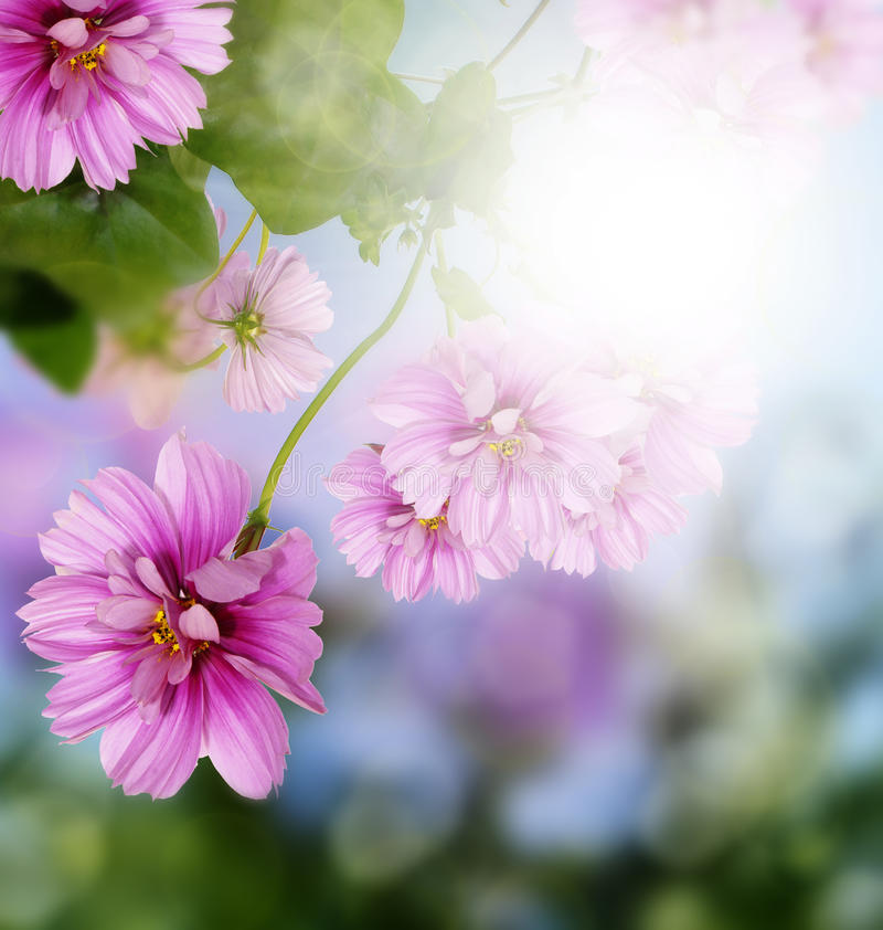 Summer beautiful flower on a blur abstract backgro stock images