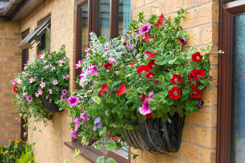 Download Summer Bedding Flowers In A Wall Mounted Basket. Stock Image    Image Of Garden